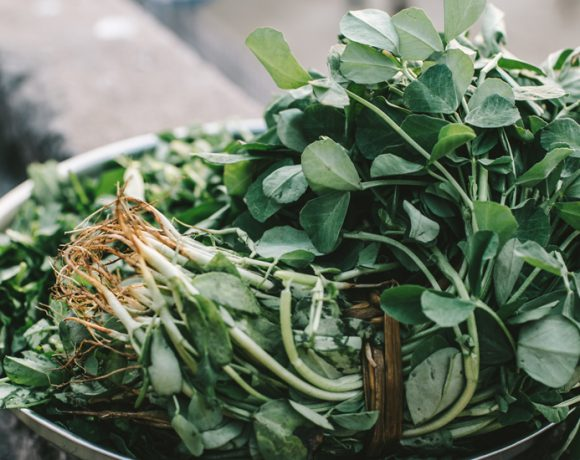 fresh methi fenugreek green leaves